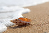 The coastal wave touches a beautiful shell lying on a clean sandy coast