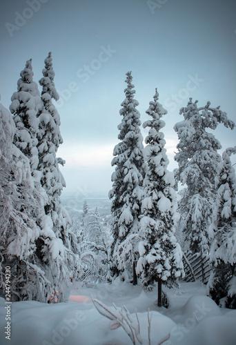Leinwandbild Motiv The Life at the arctic