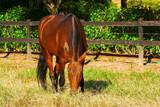 Cavalo IMG_8834 - 244819200