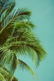 Coconut palm tree under blue sky. Vintage background. Retro toned poster. - 244898870