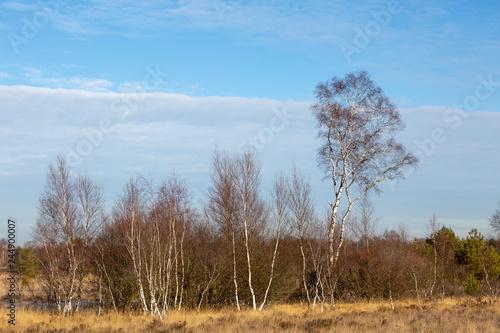 Heidelandschaft im Winter - 244900007