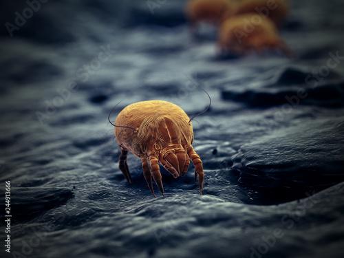3d rendered illustration of a house dust mite © Sebastian Kaulitzki