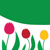Fototapeta Tulipany - tuips flower background- vector illustration © chrupka