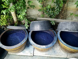 Indigenous and wisdom knowledge of thai people at Sakom nakorn and Phrae about natural colors Mauhom or indigo color in clay pot for tie batik dyeing at outdoor garden - 244953665
