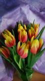 Fototapeta Tulipany - Tulpen 5 © Jenny