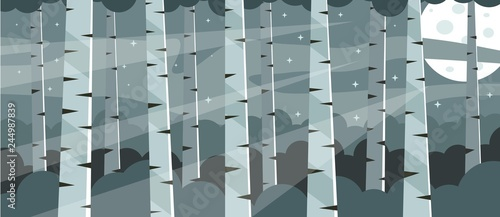 Birch grove at midnight. Birch tree trunks - 244987839