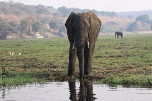 afrykański słoń przy wodopoju w mglisty poranek © Jan
