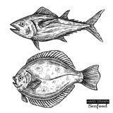 Hand drawn vector fish. Vintage seafood illustration for shop, menu or packaging design.