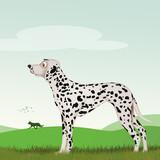 illustration of dalmatian