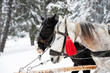 Two horses pulling cart in winter. Winter sleigh ride.