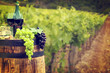 Quadro Red wine with barrel on vineyard in green Tuscany, Italy