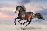 Zatoka koń biegać galop w pustynnym piasku
