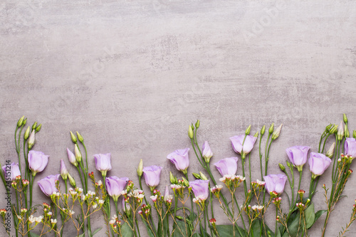 Spring greeting card, pastel color tulips on the gray background.