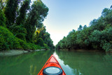 Kayaking near overgrown shore of green thick thickets of trees and wild grapes on the banks of river at summer. Bow of red kayak on Danube river.