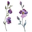 Leinwandbild Motiv Blue purple flax floral botanical flower. Watercolor background illustration set. Isolated flax illustration element.