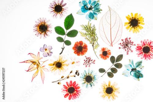 Leinwandbild Motiv colorful flowers on the white background