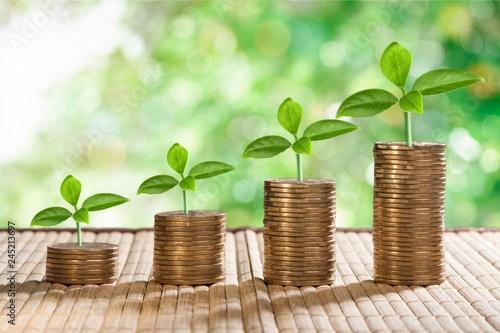 Leinwandbild Motiv Plant and coin.