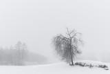 Tree in moody foggy winter landscape - 245217653