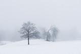 Trees in moody foggy winter landsacpe - 245217817