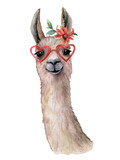 Watercolor card with llama, flower and sunglasses. Hand painted beautiful illustration with animal, red flower and sunglasses isolated on white background. For design, print, fabric or background. - 245223803