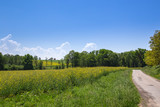 Fototapeta Fototapety z naturą - Champ de Colza © L.Bouvier