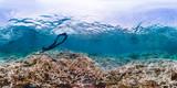 360 of snorkeler diving coral reef in American Samoa