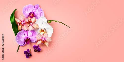 Orchid flowers on living coral color background - 245291859
