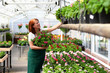 Woman working in a nursery - Greenhouse with colourful flowers