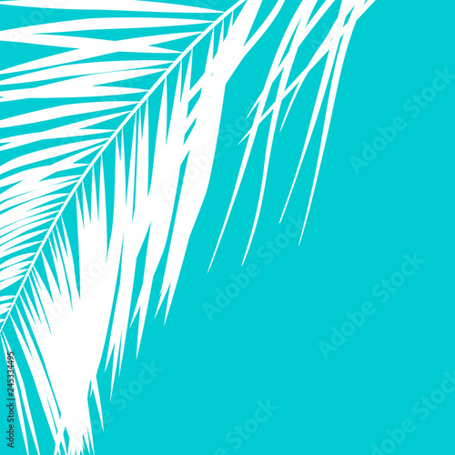 Palm. Illustration.