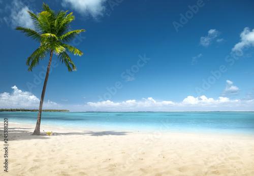 Leinwanddruck Bild palm and beach