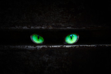 bright green cat eyes glitter in the dark in the cut metal sheet