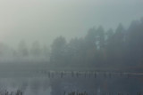 fog over the lake in the forest