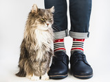 Charming kitty, men's legs, bright, multicolored socks with a nautical theme and shoes on a white, isolated background. Close-up. Concept of style, fashion and beauty