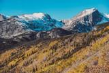 Aspen grove at autumn in Rocky Mountains - 245501863