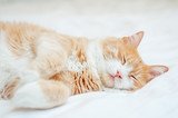 cute sleeping ginger cat at white bed. concept of calm and cozy comfort - 245526054
