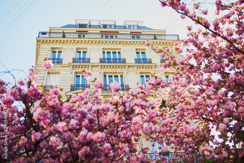 Cherry blossom season in Paris, France