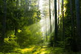 A lightened path in the forest - 245556628