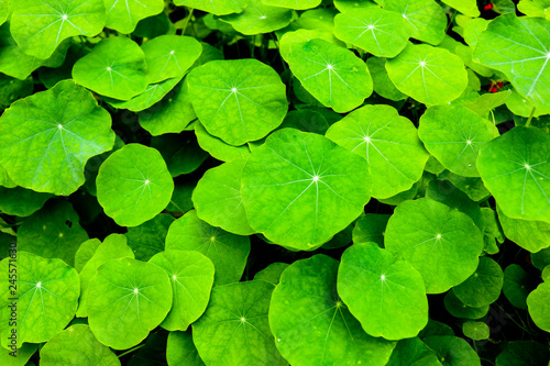Green leaves background - 245571630