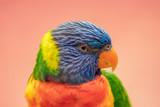 Portrait of a beautiful parrot