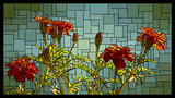 Vector stained glass window with blooming red marigolds. - 245711817