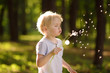 Leinwandbild Motiv Little boy blows down dandelion fluff. Making a wish.