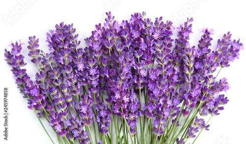 Lavender. - 245974858