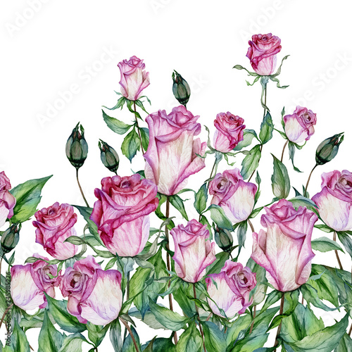 Beautiful rose flowers with green leaves on white background. Seamless floral pattern, border. Watercolor painting. Hand painted illustration © katiko2016
