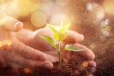 Green Growing Plant and Human Hands - 246023806