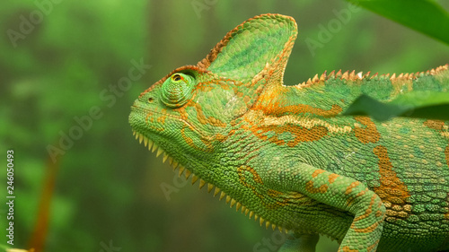 close up of a chameleon lizard on a branch looking up