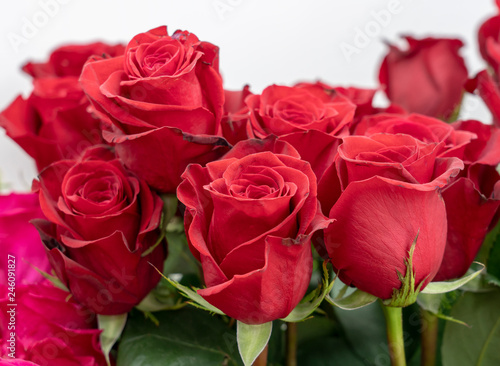 a lot of delicate flowers of a red rose closeup