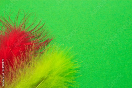 Colorful poster for holidays and carnival. Colored feathers on a green background. Copy space. - 246113073