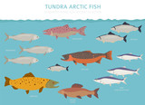 Tundra biome. Terrestrial ecosystem world map. Arctic fish infographic design