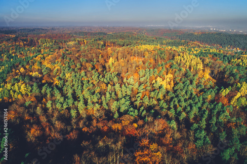Sunny autumn forest in aerial view. - 246157054