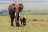Elephant with a calf on the plains in the Masai Mara National Park in Kenya